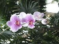 Orchid - feng shui to sell house