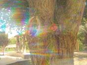 Shaman waterfall soul collage